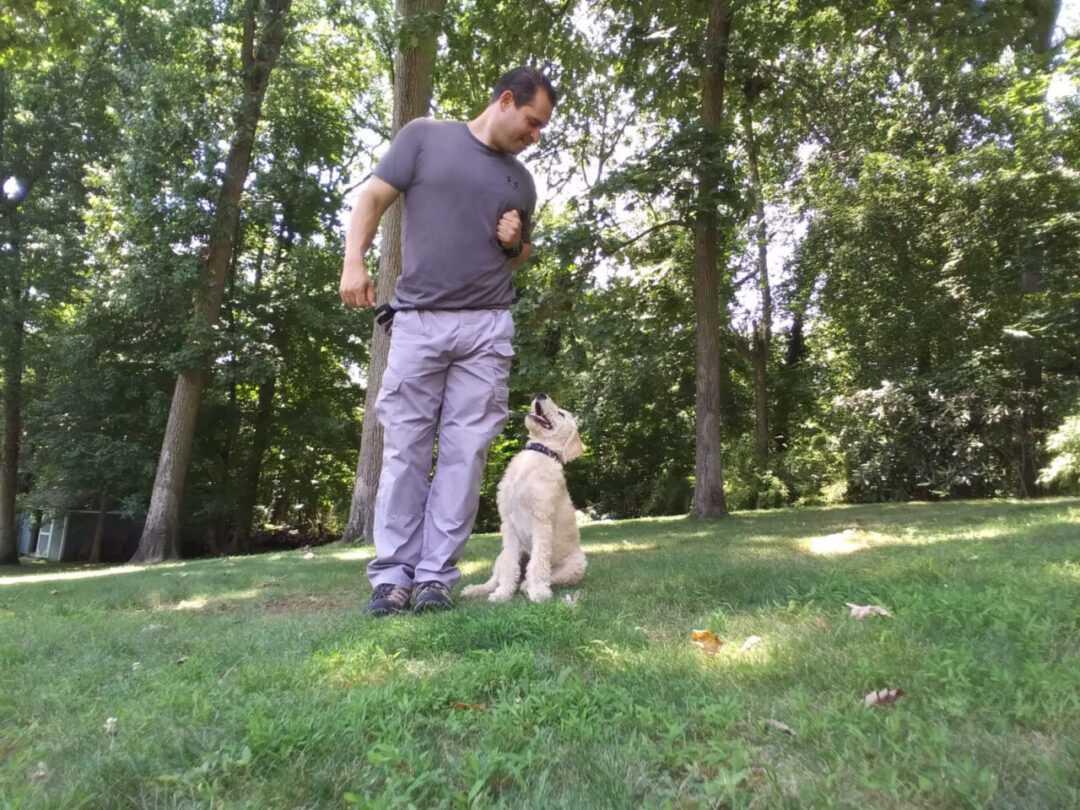 puppy training in Nassau County